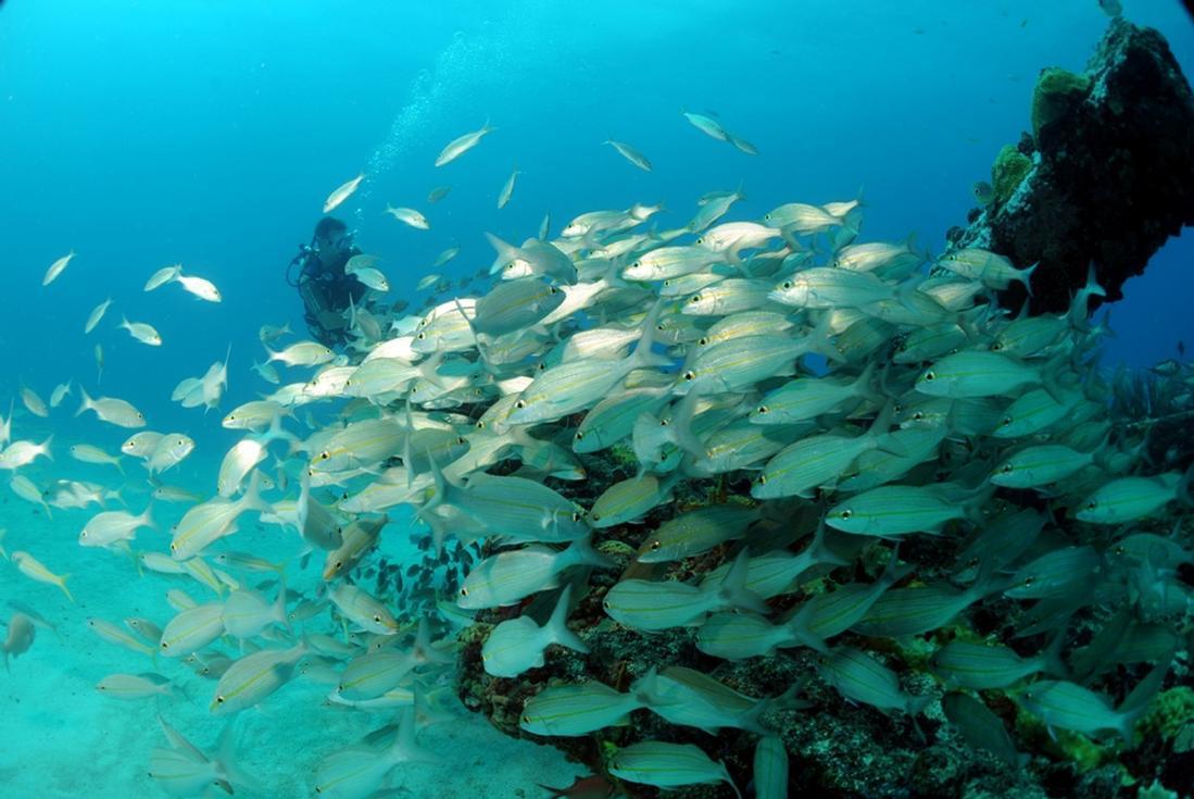 diving in st maarten
