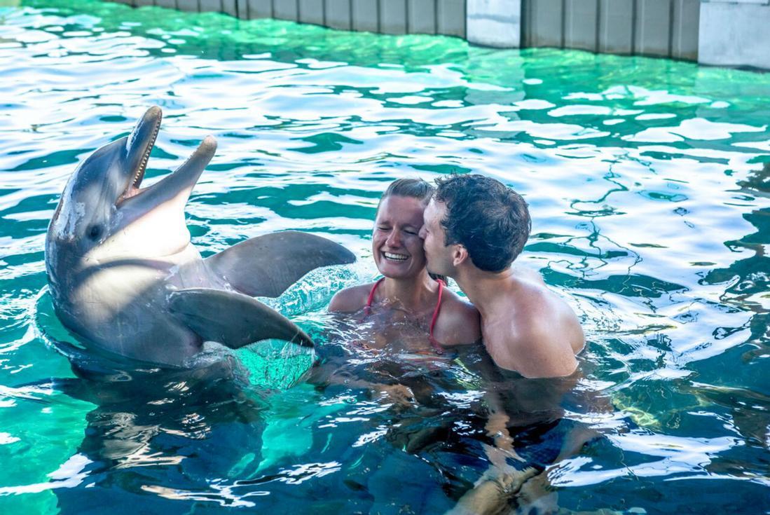 dolphin encounter nassau