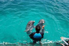 Cancun Dolphin Park Admission