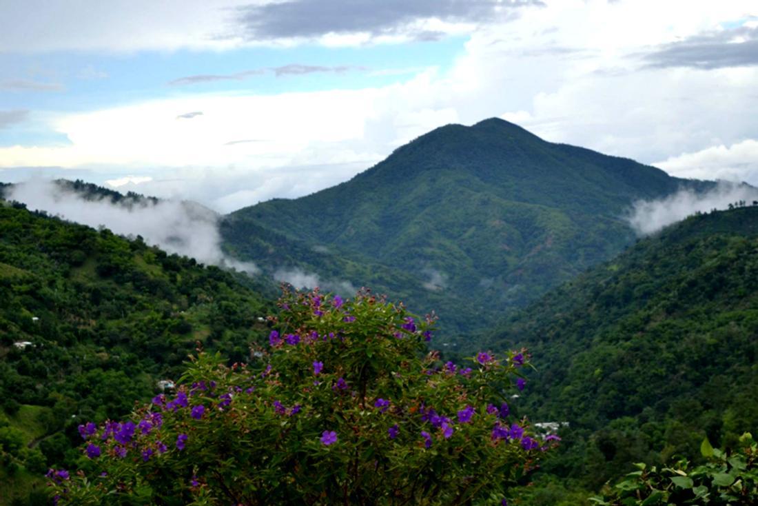 Blue Mountain Tour Jamaica