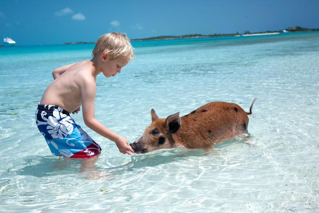 swimming pigs tour exuma