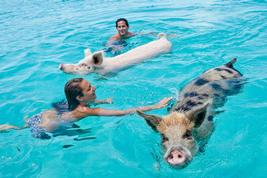 swimming with pigs in exuma