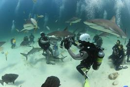 shark diving bahamas
