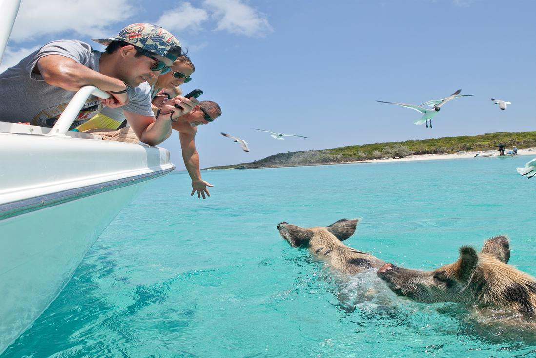 Swimming With The Pigs Exuma - Island Routes