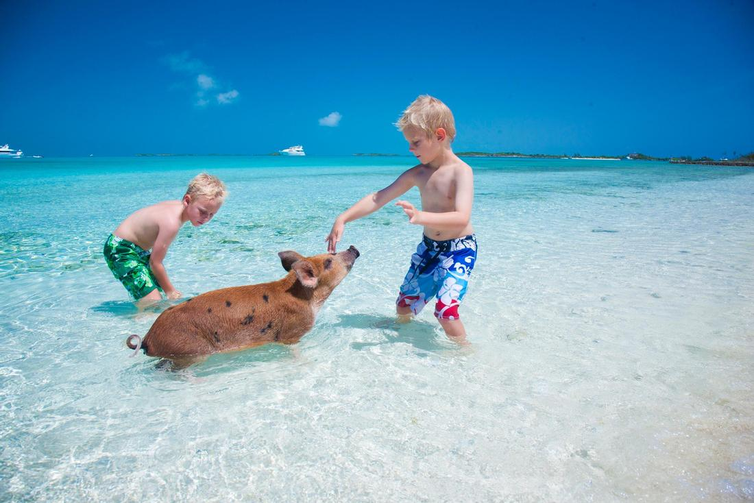 Swimming With Pigs In Exuma Beach